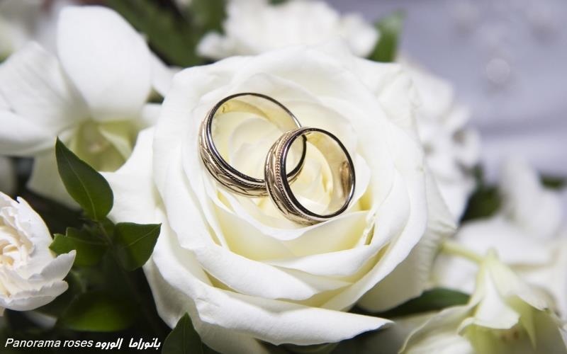 اختيار الزوجة