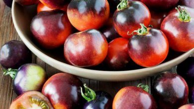 Photo of الطماطمُ السوداءُ على موائدِ الغزيينَ بعدَ ستةِ أشهُر