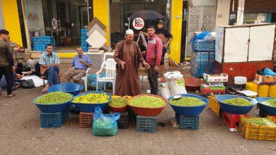 Photo of موسم حصاد الزيتون